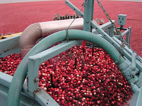 farm cranberries image
